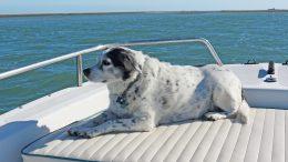 freeway-on-boat-daydreamer
